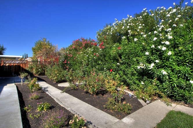 136-adria-dr-pleasant-hill-ca-small-025-garden-666×444-72dpi