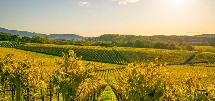 Wine Country Home Sales Show Strength In November